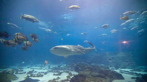 man swims in shark tank, man swims naked shark tank, man swims naked viral video, man swims naked shark tank canada, indian express, indian express news