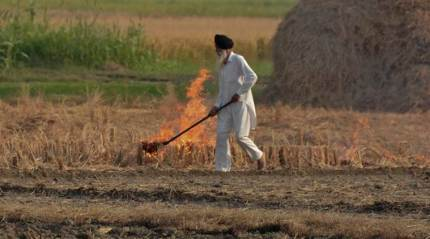 Punjab: Stubble burning incidents cross last year's figures, may go up