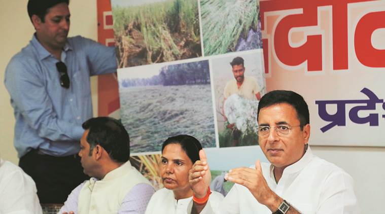Farmers not being given MSP: Congress leader Surjewala