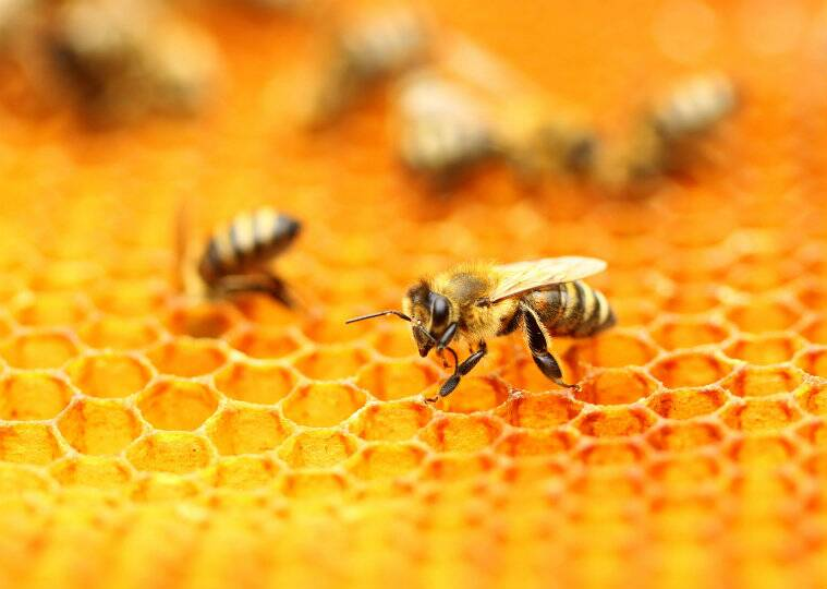 Climate change, Bees, Bee Technology, pollination, cross pollination, Bees essential to society, human activity, disruptions in weather patterns, seasons, crops, direct effects on flora, fauna