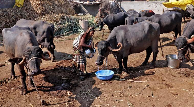 Parched villages begin to empty out in drought-hit Maharashtra