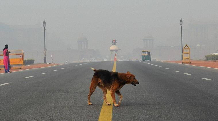 delhi pollution, dogs in air pollution, delhi pollution animals, dogs in delhi pollution, indian express, indian express news