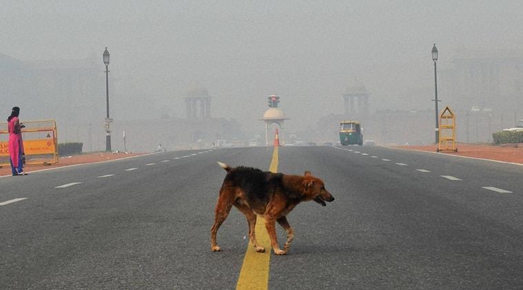 delhi pollution, dogs in air pollution, delhi pollution animals, dogs in delhi pollution, indian express, indian express news