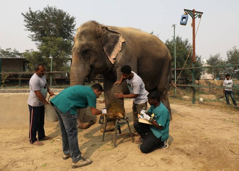 Jumbo leap: India opens first hospital for elephants