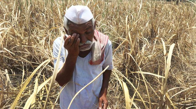 maharashtra, maharashtra drought, pm farmer scheme, prime minister fasal bima yojana, maharashtra farmers, crop, crop insurance, kharif, kharif crop, shiv sena, agriculture, mumbai news, maharashtra news, indian express news