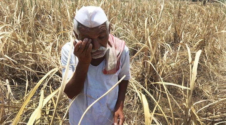 Maharashtra: Fodder, water scarce, villagers blame govt