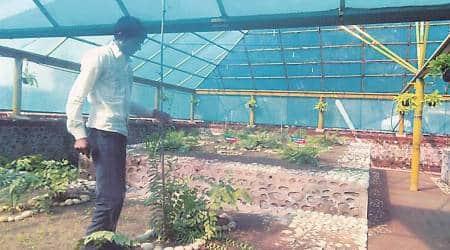 fern plants, gardening, botanical garden, sukhna wildlife sanctuary, sukhna lake, india news, indian express