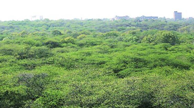 Delhi: Two forest officers suspended for 'failing to prevent encroachment'
