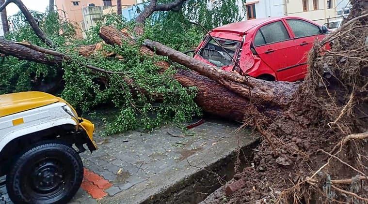 Image result for gaja storm damage
