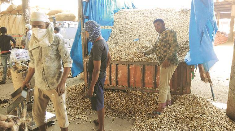 farmers, groundnut farnmers, quality of groundnuts, average quality ground nuts, Indian Express