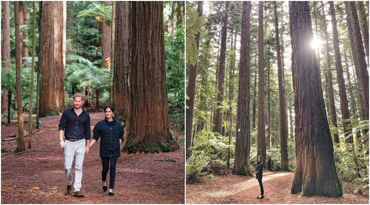 prince harry, meghan markle, duke of sessex, royal in new zealand, harry meghan baby, harry meghan baby bump, prince harry takes meghan baby bump photo, Redwoods Treewalk in Rotorua, viral news, royal news, indian express