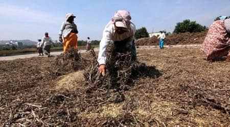 Explained: Why soyabean is key to Madhya Pradesh