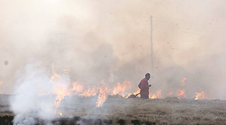 stubble burning, crop burning, punjab stubble burning, punjab crop burning, stubble burning pollution, stubble burning delhi, punjab farmers, elections 2019, lok sabha elections 2019