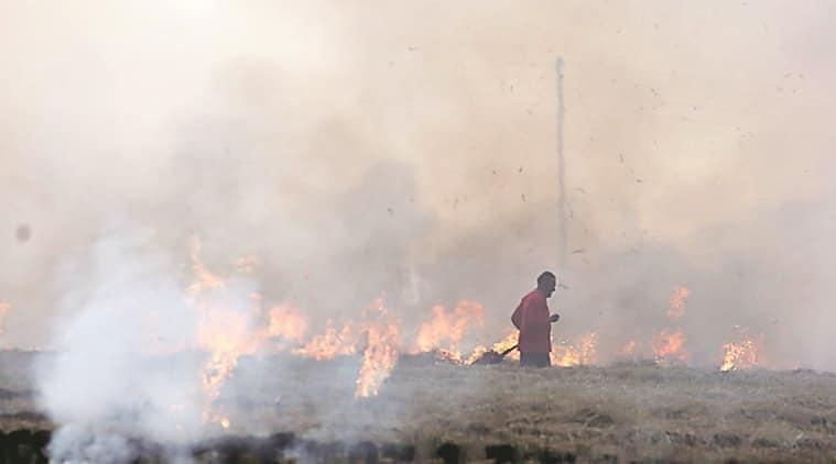 delhi air pollution, crop burning, Stubble burning, stubble burning punjab, punjab farmers, delhi pollution, air quality delhi, indian express