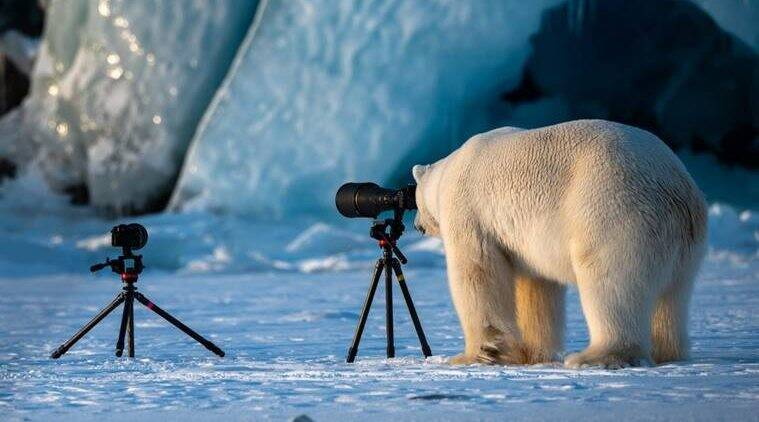 comedy wildlife photography, winners of comedy wildlife photography, comedy wildlife photography 2018, comedy wildlife photography winner 2018, comedy wildlife photography latest news, comedy wildlife photography pictures, comedy wildlife photography photos, comedy wildlife photography categories, comedy wildlife photography jury, indian express news, indian express
