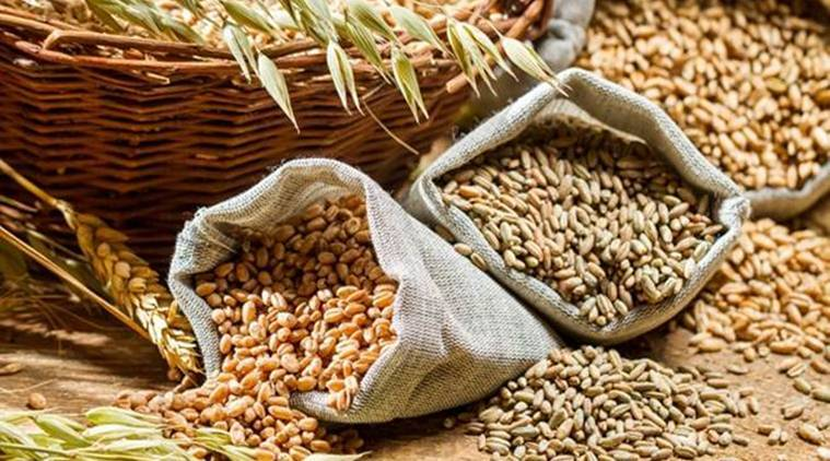 Foodgrain stocks hit record high, wheat area is largest ever