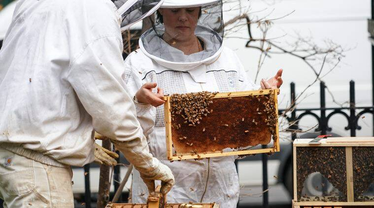 Vaccine for honeybees could be a tool to fight population decline