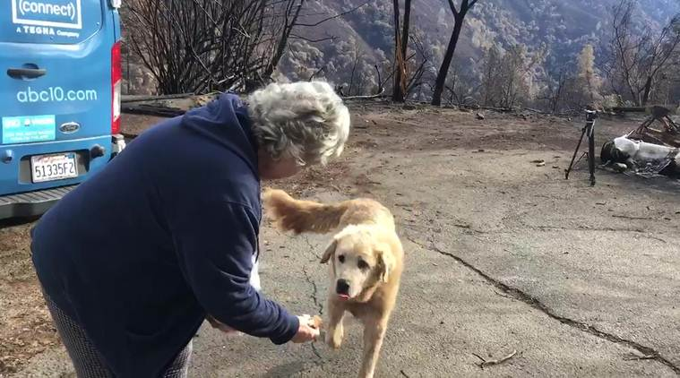 California wildfire, dog that guarded the house during wildfire, dog suwildfire in california, world news, global news, indian express