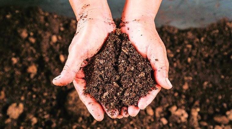 soil, soil and environment, soil and plastic, soil and plastic pollution, inert urban spaces, soil renewal, environmental spaces, indian express, indian express news