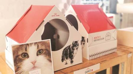 Pets and their parents come together in cafe as a 'meowment' takes shape