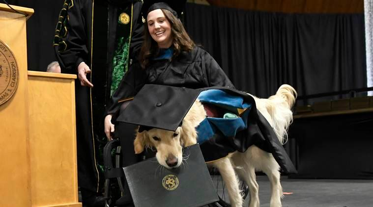 service dog gets diploma, US dog gets diploma, retriever dog gets a diploma, World news, Indian Express