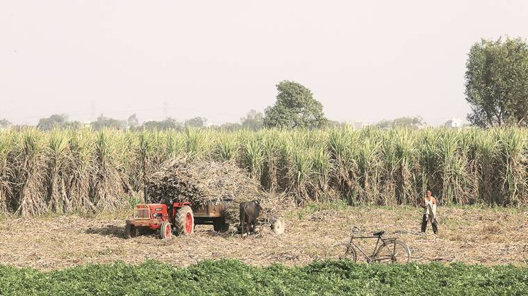 indian economy, gst, RBI, reserve bank of india, india agriculture sector, MSE, economy news, farm crisis, agricultural growth, agricultural crisis
