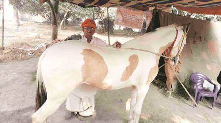 Wildlife Protection Act, sonepur fair, cattle trade, Indian express