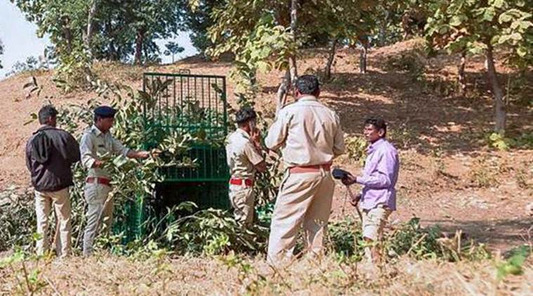 Leopard elusive, Gujarat forest dept officials put in cage to capture it