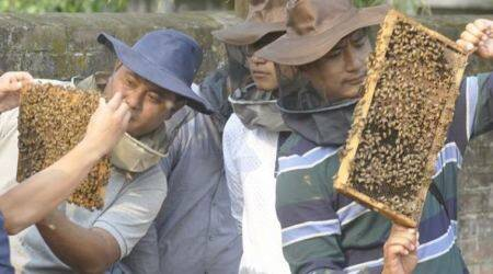 Nagaland Beekeeping and Honey Mission