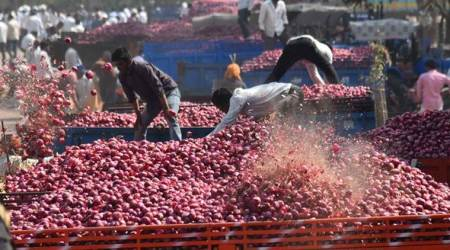 onion, onion cultivation, onion farming, onion farmers, onion prices, indian express