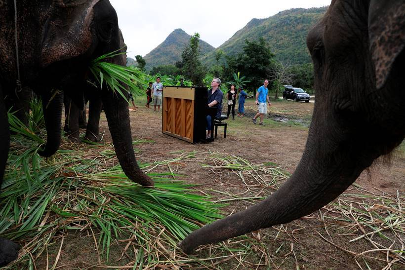 Classical piano soothes sick elephants at Thai sanctuary