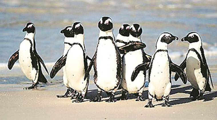 Aquatic gallery At Science City Gujarat to house penguins, sharks as latest attractions