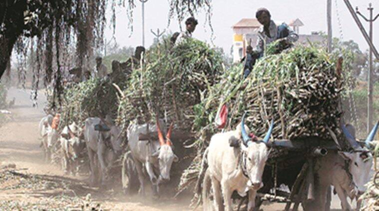 Pune: As cane dues rise over 3,000 crore, millers try to raise funds to pay farmers