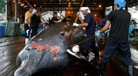 International Whaling Commission, Japan exits whaling commission, Japan commercial whaling, Japan's territorial waters, anti-whaling, whaling advocates, World news, Indian Express