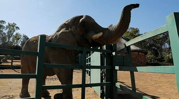 Rivero Zoo, condition of animals inRivero Zoo, animals killed inRivero Zoo,Rivero Zoo animal activists, US Department of culture