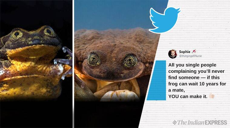 world loneliest frog, romeo frog found juliet, Bolivian frog finds soul mate, odd news, scieence news, viral news, indian express