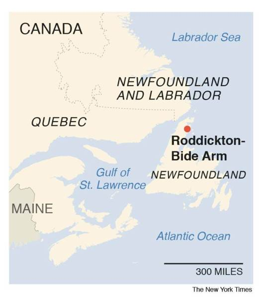 Canada seals, Canada town seals, Roddickton Canada, Roddickton Canada seals, Newfoundland Island Canada, Newfoundland seals, Sheila Fitzgerald, Canada fisheries department, Indian express, world news, latest news