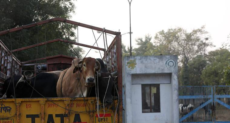 uttar pradesh cattle protection, government against number of cows
