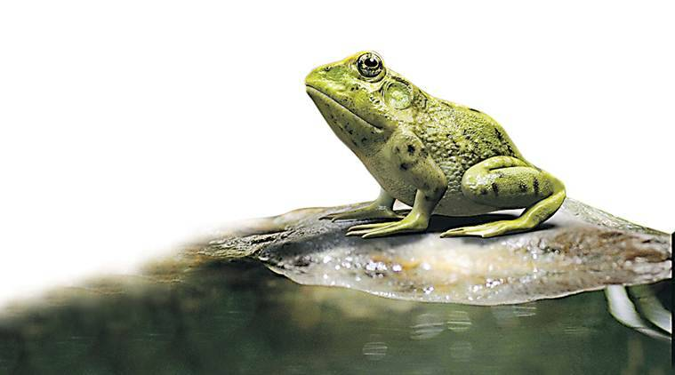 19 amphibian species critically endangered: Zoological Survey of India