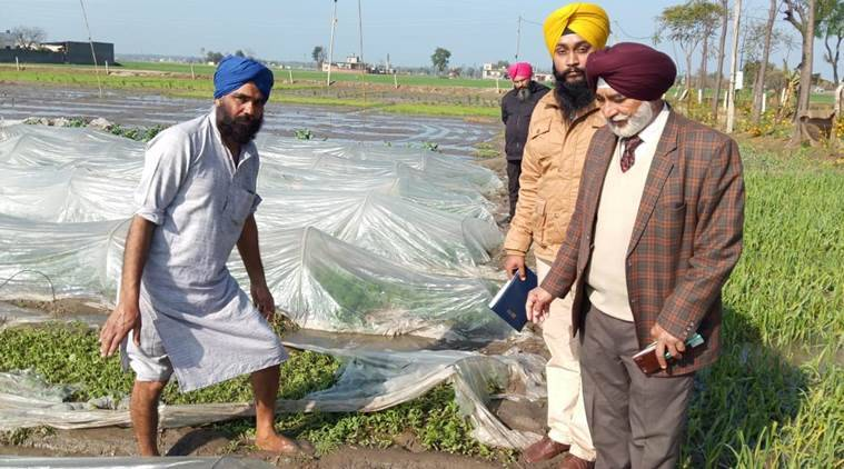 Punjab: Hailstorm damages crops on 3,150 acres in Sangrur