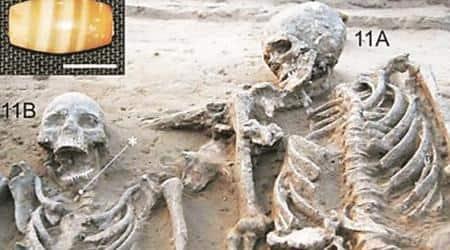 Harappan Civilisation, Harappan Period, Rakhigarhi, Harappan culture, Harappan findings, male and female Harappan skeleton, marriage in Harappan culture, Indian express