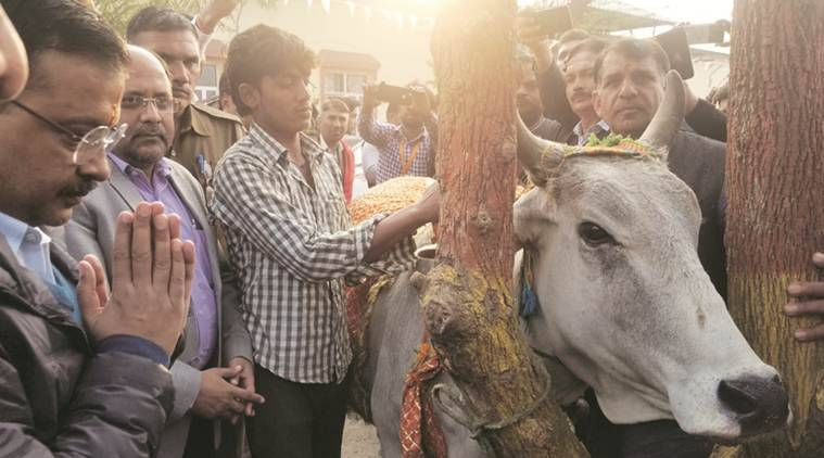At Lok Sabha campaign in Haryana, Kejriwal pledges month's salary to cow shelter