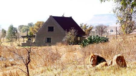 Lion House, Lion House GG Conservation, GG Conservation Wildlife reserve and Lion Sanctuary, GG Lions NPC, Airbnb, Lion House Airbnb, indian express, indian express news