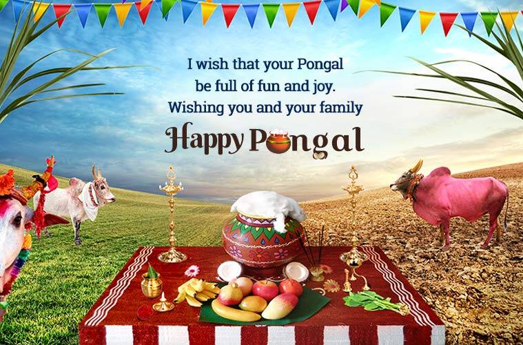 happy pongal, happy pongal 2019, pongal, pongal 2019,