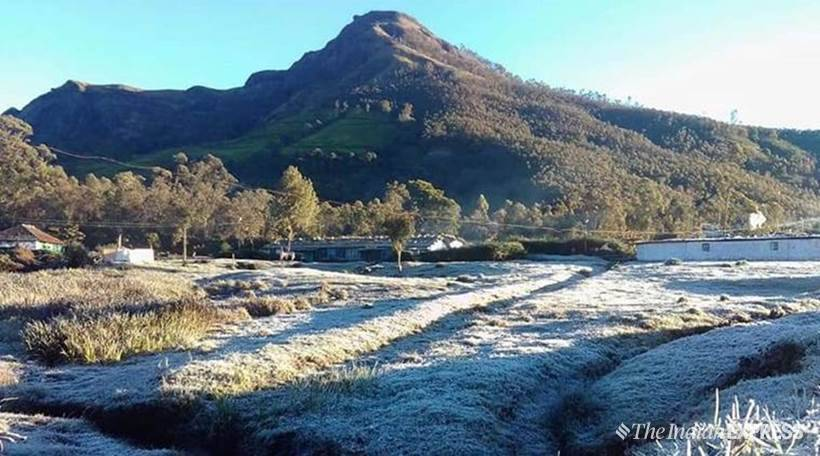 Mercury dips in Kerala; Munnar covered with frost