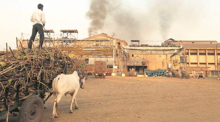 Raising Cane: What ails sugar production in Maharashtra