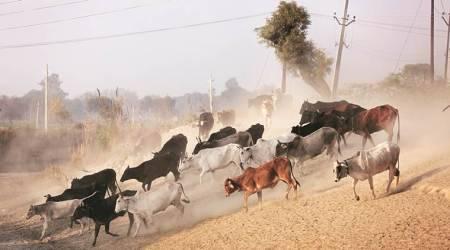 SHO Kumar said the school staff had alleged that the miscreants misbehaved with them when they objected to the animals being herded into the school. (Representational)
