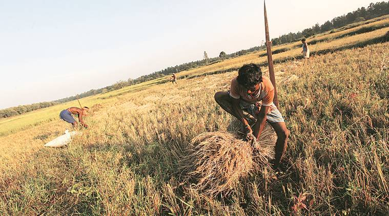 Agriculture needs long-term action beyond financial support packages