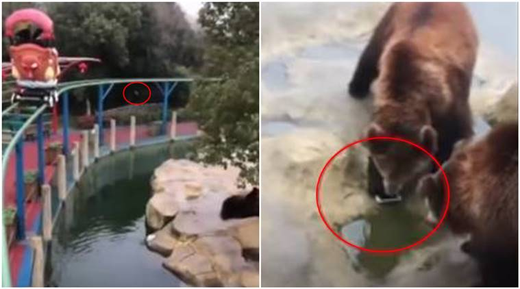 apple, i phone, man throws i phone in bear enclosure, tourist throws phone giving food bear, viral video, china