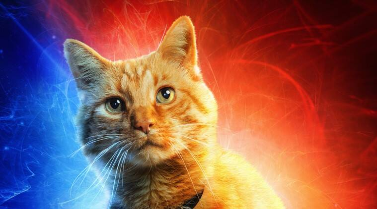 Here Is Why The Name Of Captain Marvel's Cat Was Changed For The Movie